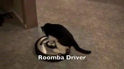 Cat Riding Vaccum