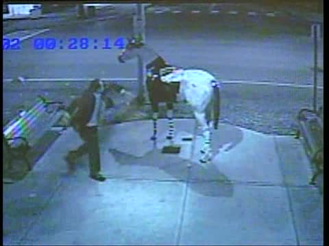 Drunk Guy Mounting Fake Horse